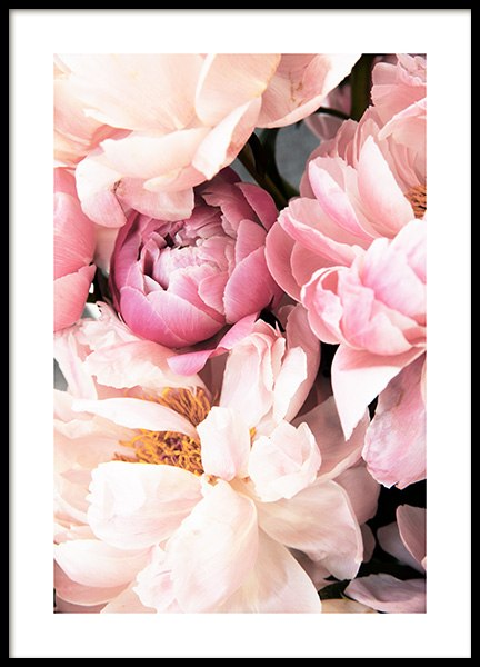 Pink Peonies No2 Poster in the group Prints / Photographs at Desenio AB (12905)