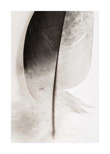 Lost Feather Poster in the group Prints / Photographs at Desenio AB (12982)