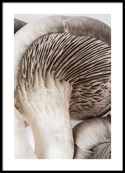 Mushroom Poster in the group Prints / Kitchen at Desenio AB (12990)