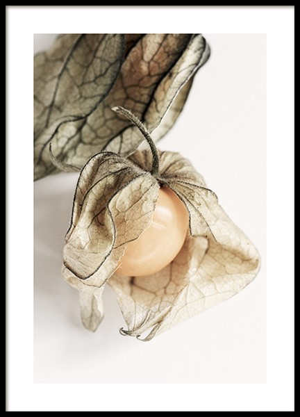 Physalis Poster in the group Prints / Kitchen at Desenio AB (12992)