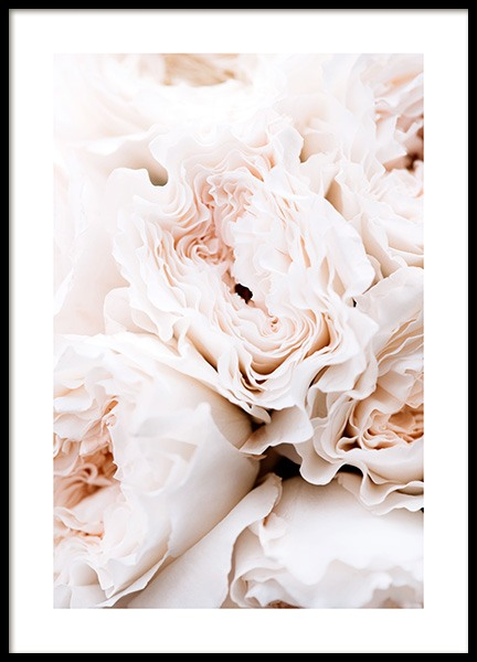 Blossoming Roses Poster in the group Prints / Floral at Desenio AB (12995)
