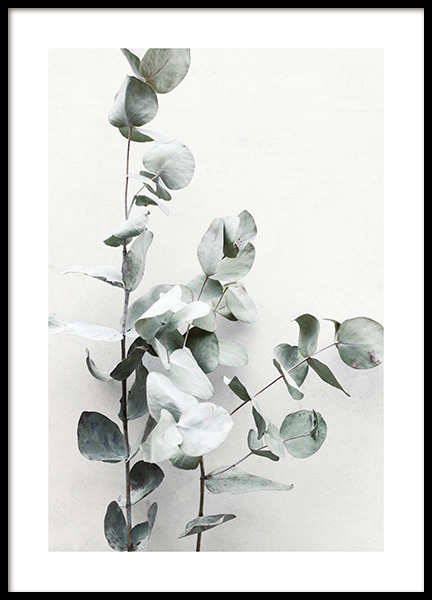 Eucalyptus Twigs No1 Poster in the group Prints / Photographs at Desenio AB (13010)