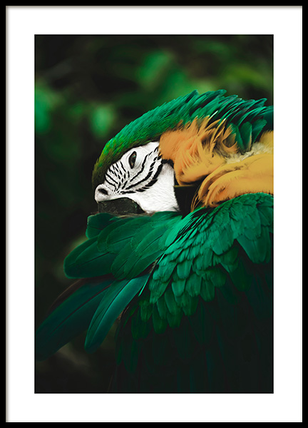 Jungle Parrot Poster in the group Prints / Photographs at Desenio AB (13069)