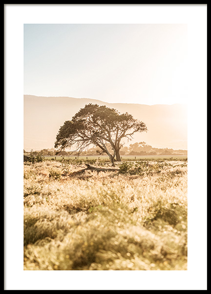 Sunset Tree Poster in the group Prints / Nature at Desenio AB (13087)