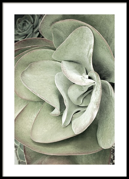 Succulent Plant Poster in the group Prints / Photographs at Desenio AB (13159)