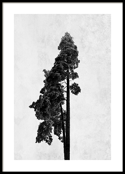 Pine Tree Poster in the group Prints / Black & white at Desenio AB (13205)