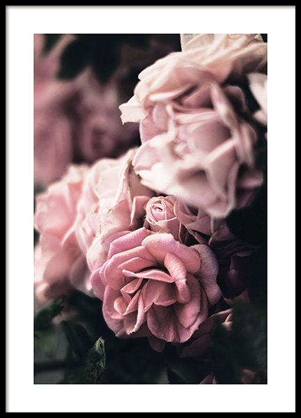 Delicate Rose Poster in the group Prints / Photographs at Desenio AB (13219)
