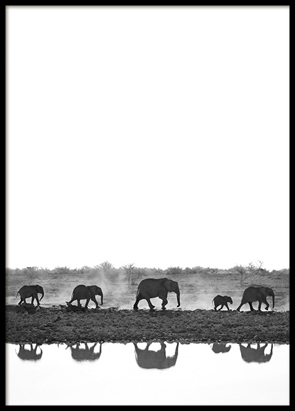 Elephant Walk Poster in the group Prints / Black & white at Desenio AB (13249)