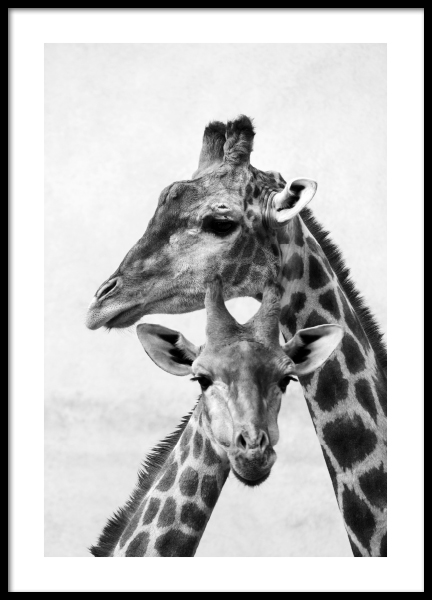 Giraffe Emotions Poster in the group Prints / Black & white at Desenio AB (13250)