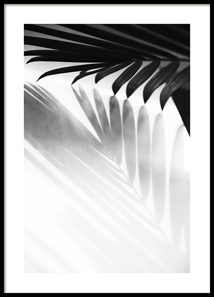 Palm Shadow B&W Poster in the group Prints / Black & white at Desenio AB (13251)