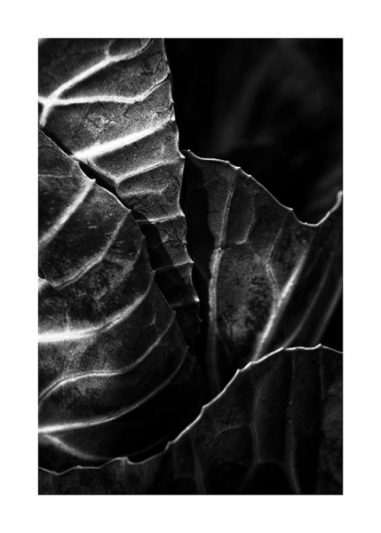 Cabbage B&W Poster in the group Prints / Black & white at Desenio AB (13256)