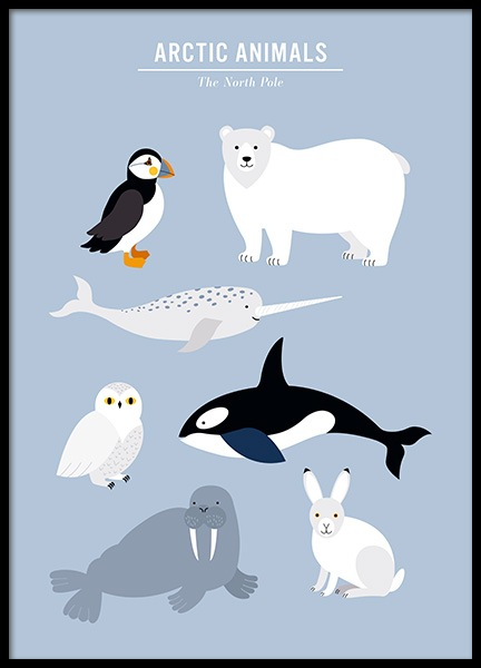 Arctic Animals Poster in the group Prints / Kids at Desenio AB (13316)