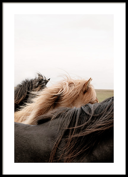 Horses of Iceland Poster in the group Prints / Photographs at Desenio AB (13354)