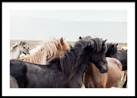 Horse Herd Poster in the group Prints / Photographs at Desenio AB (13368)
