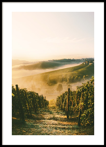 Langhe Vineyard Poster in the group Prints / Nature prints / Landscapes at Desenio AB (13394)