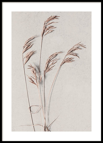 Desert Grass Poster in the group Prints / Botanical at Desenio AB (13420)