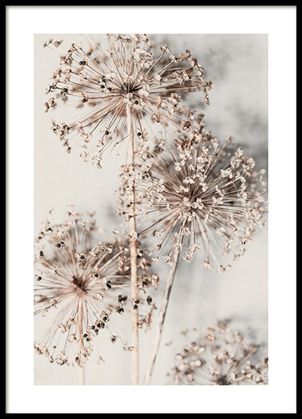 Autumn Allium Poster in the group Prints / Botanical at Desenio AB (13421)