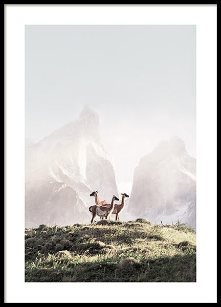 Guanacos Poster in the group Prints / Animals at Desenio AB (13515)