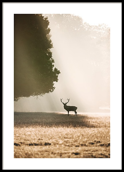 Red Deer in the Sunlight Poster in the group Prints / Animals at Desenio AB (13517)