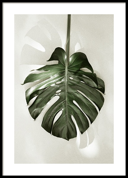Monstera in Sunlight Poster in the group Prints / Botanical / Monsteras at Desenio AB (13570)
