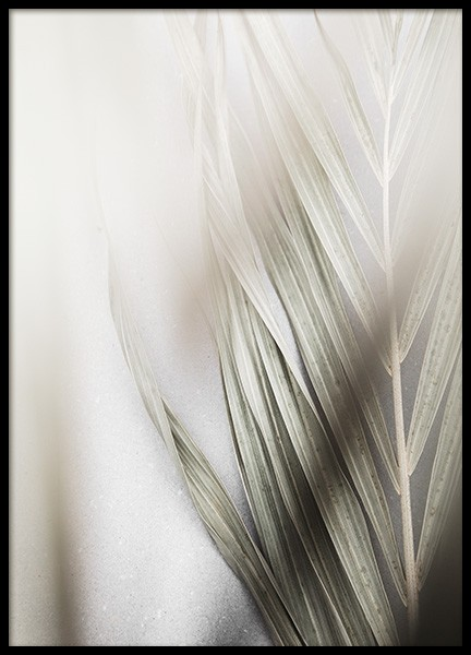 Foggy Palm Leaf Poster in the group Prints / Botanical / Palms at Desenio AB (13574)