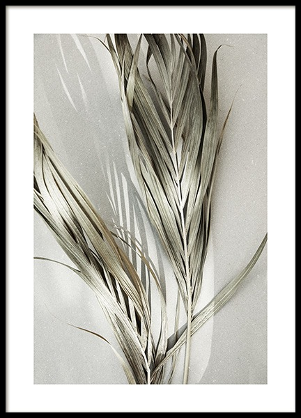 Dry Palm Leaves Poster in the group Prints / Botanical / Palms at Desenio AB (13575)