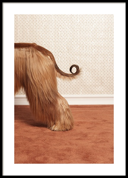 Afghan Hound Poster in the group Prints / Animals / Pets at Desenio AB (13594)