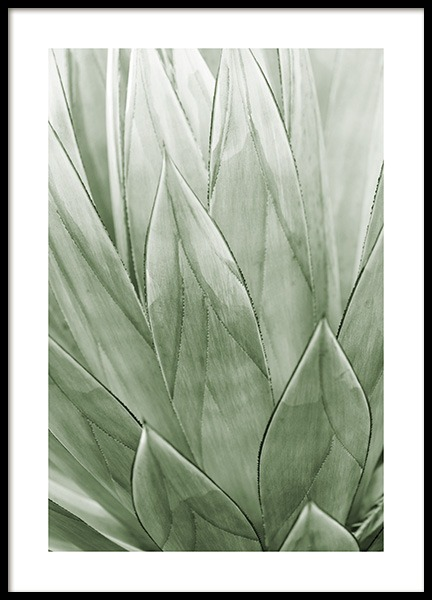 Agave Plant Poster in the group Prints / Botanical / Green plants at Desenio AB (13612)