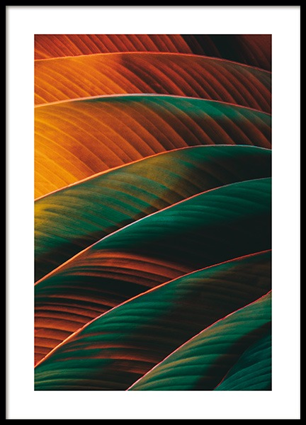 Retro Palm Leaf Poster in the group Prints / Botanical / Palms at Desenio AB (13623)