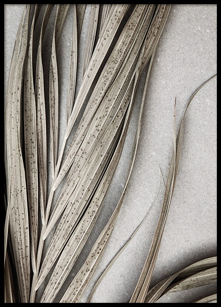 Dry Palm Leaves No1 Poster in the group Prints / Botanical / Palms at Desenio AB (13670)