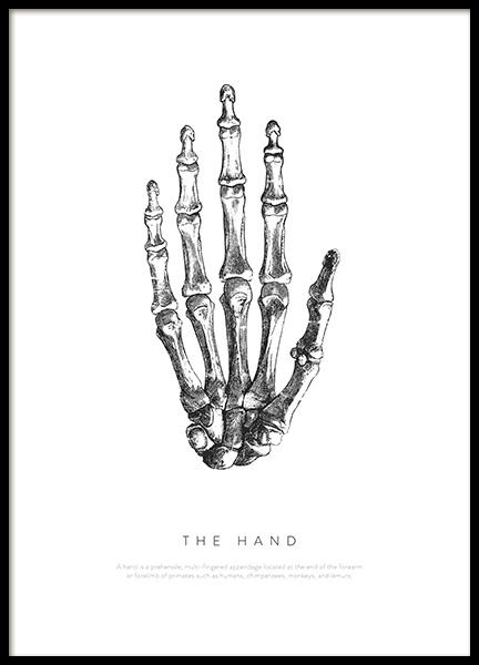 Hand Anatomy Poster in the group Prints / Illustrations at Desenio AB (13729)