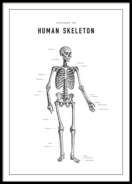 Human Skeleton Anatomy Poster in the group Prints / Illustrations at Desenio AB (13731)
