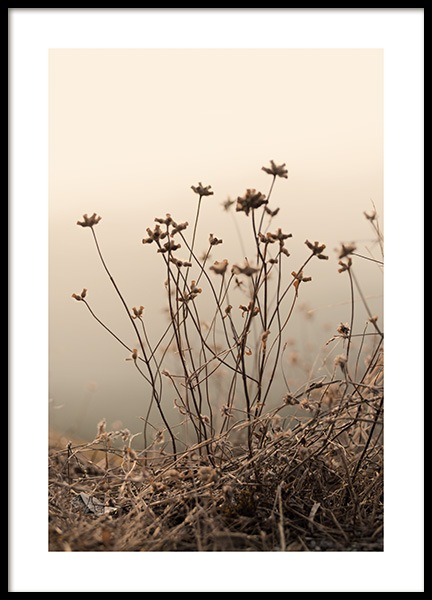 Withered Flowers on Field Poster in the group Prints / Botanical / Flowers at Desenio AB (13822)