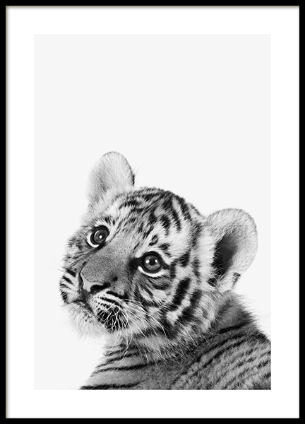 Baby Tiger Poster in the group Prints / Animals at Desenio AB (13857)