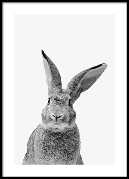 Black and White Rabbit Poster in the group Prints / Animals at Desenio AB (13859)