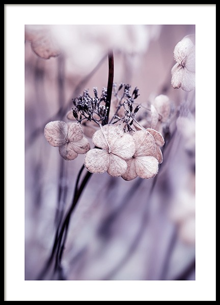 Hydrangea Seed Heads Poster in the group Prints / Botanical / Flowers at Desenio AB (13871)