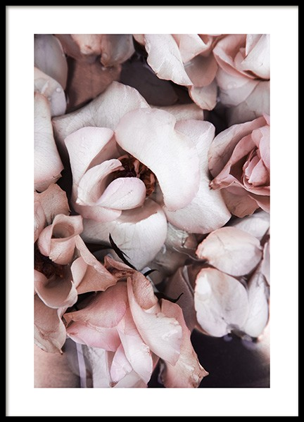 White and Pink Roses Poster in the group Prints / Botanical / Flowers at Desenio AB (13876)