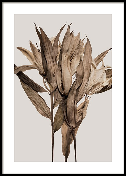 Dry Flowers Poster in the group Prints / Botanical / Flowers at Desenio AB (13954)