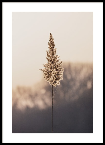 Lonely Reed Poster in the group Prints / Botanical / Green plants at Desenio AB (13955)