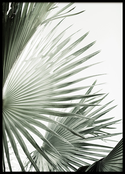 Green Palm Leaves Poster in the group Prints / Botanical / Palms at Desenio AB (13986)