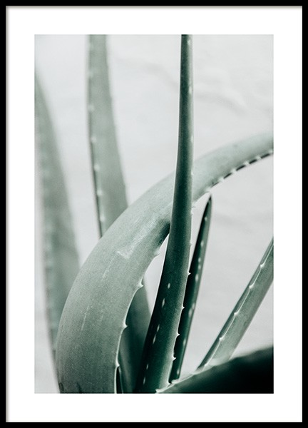 Aloe Vera Plant Poster in the group Prints / Botanical / Green plants at Desenio AB (13987)