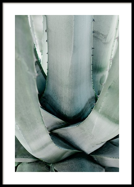 Aloe Vera Cactus Poster in the group Prints / Botanical / Green plants at Desenio AB (13988)