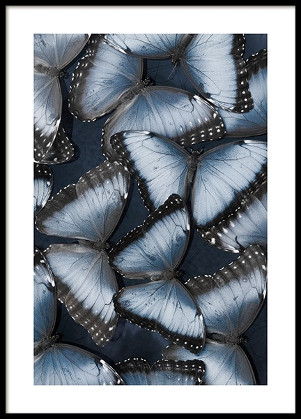Morpho Butterflies Poster in the group Prints / Animals / Insects at Desenio AB (14010)