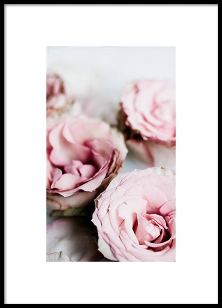 Soft Roses Poster in the group Prints / Botanical / Flowers at Desenio AB (14037)