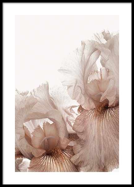 Iris Flowers Poster in the group Prints / Botanical / Flowers at Desenio AB (14102)