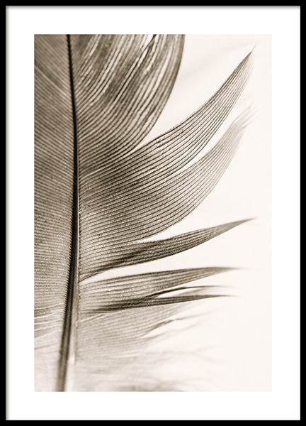 Soft Feather Poster in the group Prints / Photographs at Desenio AB (14205)