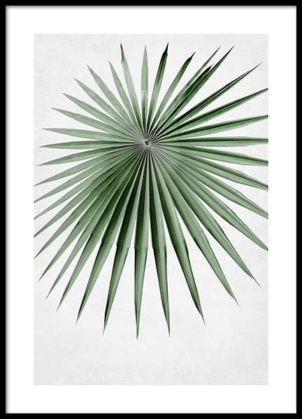 Green Palm Leaf Poster in the group Prints / Botanical / Palms at Desenio AB (14298)