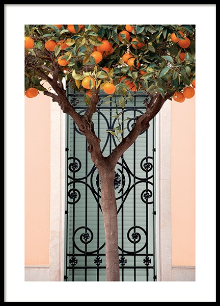 Orange Tree in Valencia Poster in the group Prints / Photographs at Desenio AB (14325)