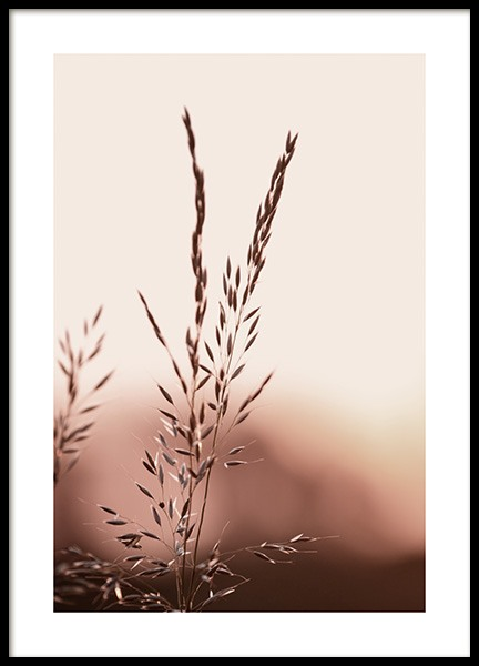 Sunset Meadow Poster in the group Prints / Botanical / Green plants at Desenio AB (14533)
