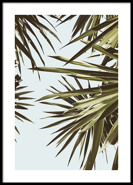 Leaves Against Sky Poster in the group Prints / Botanical / Palms at Desenio AB (14571)